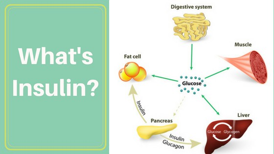 WHAT IS INSULIN?