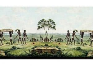 Melaleuca tree leaves were used by Australian Aborigines for healing purposes.