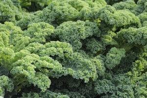 Kale is a King